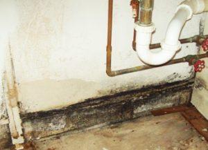 Mold Remediation NH