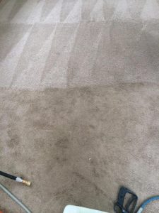 professional carpet cleaning- manchester, nh