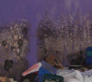 black mold removal raymond, nh